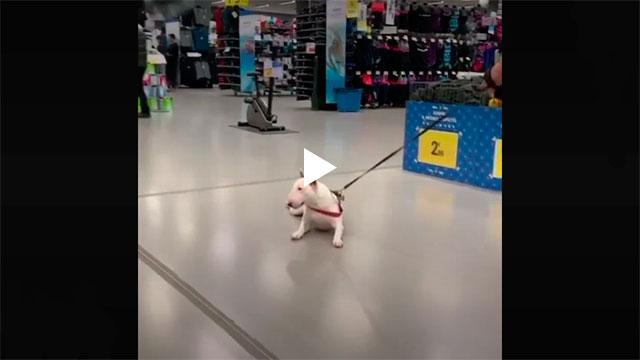 https://www.ahnegao.com.br/2019/12/esse-cachorro-simplesmente-decidiu-que-nao-vai-mais-caminhar.html
