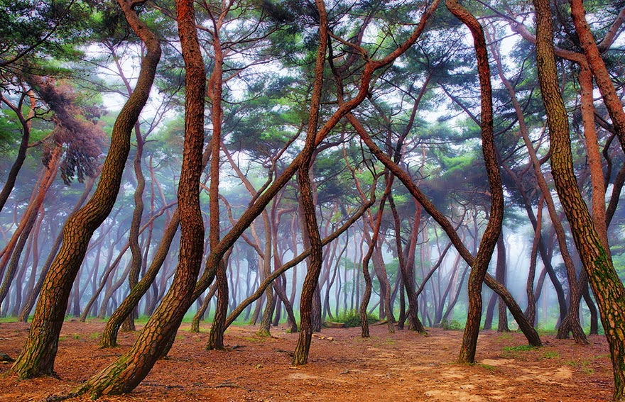 9. Misty Forest - 22 Mysterious Forests I'd Love To Get Lost In