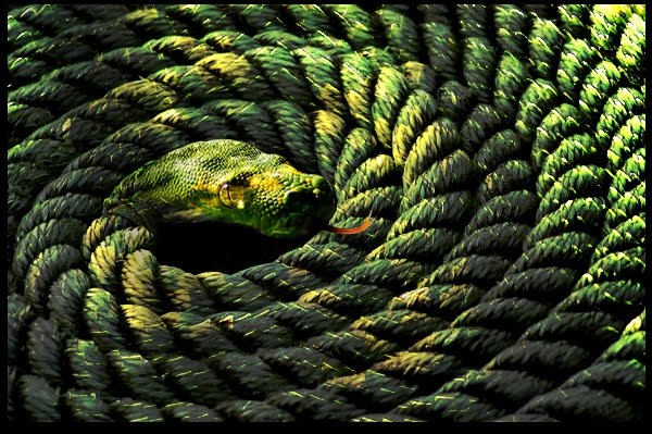 Vedantic Theory of Perception Rope Snake