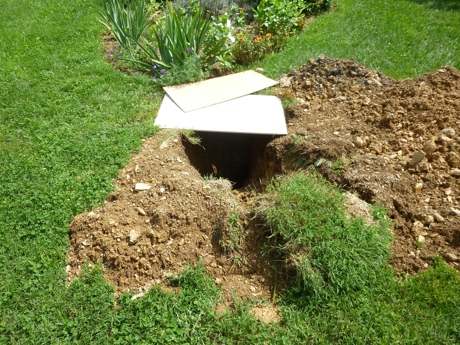 Reflections Septic Tank Problems