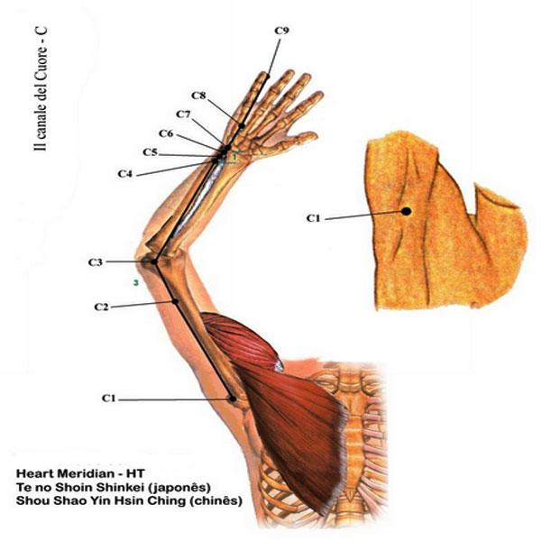 Titik Meridian Jantung, Manfaat Titik Meridian Jantung, letak Titik Meridian Jantung, Manfaat dan Letak Titik Meridian Jantung