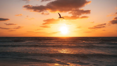 Wallpaper Bird, Sunset, Beach, Coast, Horizon