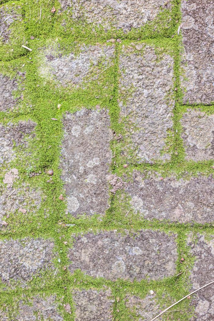moss growing between pavers