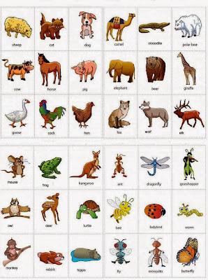 Nama nama Hewan dalam Bahasa Inggris
