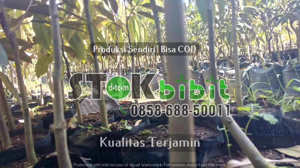 Hijaukan Bumi Nusantara Tercinta    terjamin     terjamin