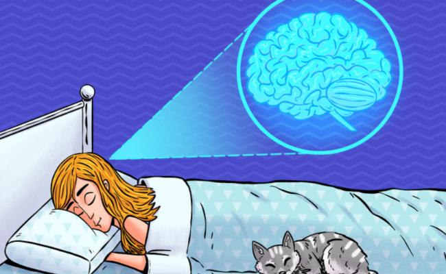كيف تتسبب قلة النوم علي ان يأكل المخ نفسه
