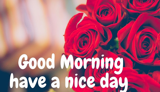 Good Morning have a nice day Red Rose Image