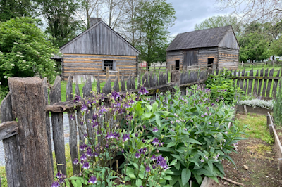 A rough wooden picket fence surrounds a garden with raised beds, two log buildings are in the background. A plant with purple flowers grows next to the fence at the front of the image.