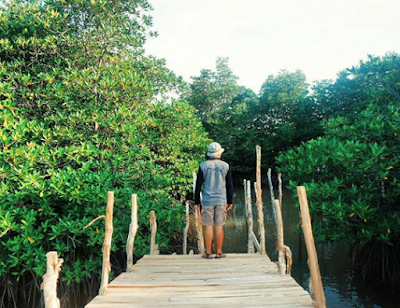 Pohon bakau pantai dewi mandapa