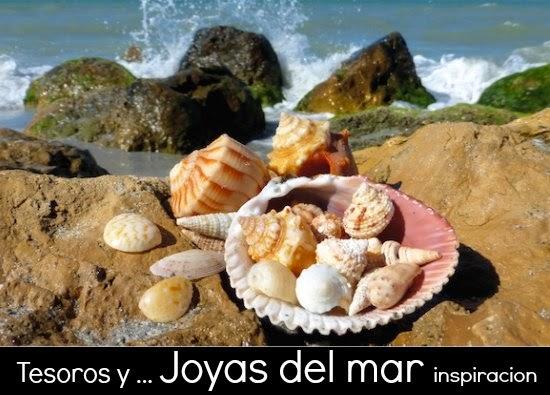 Joyas y Tesoros del Mar, las Conchas