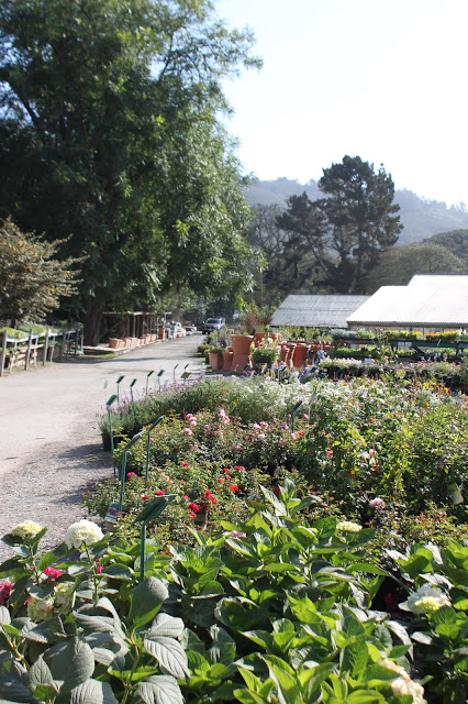 Front drive of Half Moon Bay Nursery
