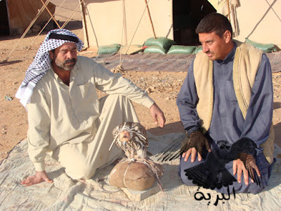 صيد الصقور في بادية الحماد ( منطقة الشيحيات ) الرطبة ابو غزوان و صالح دلي