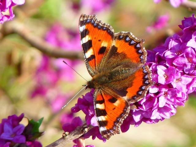 Blumensprache Die Blumen Gedicht Von Schiller
