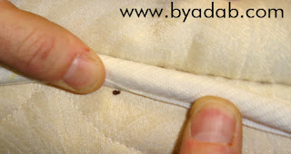 Changing season and everyone is worried about bed bug epidemic.