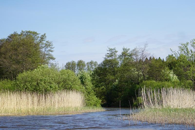 viträsk, järvi siuntio