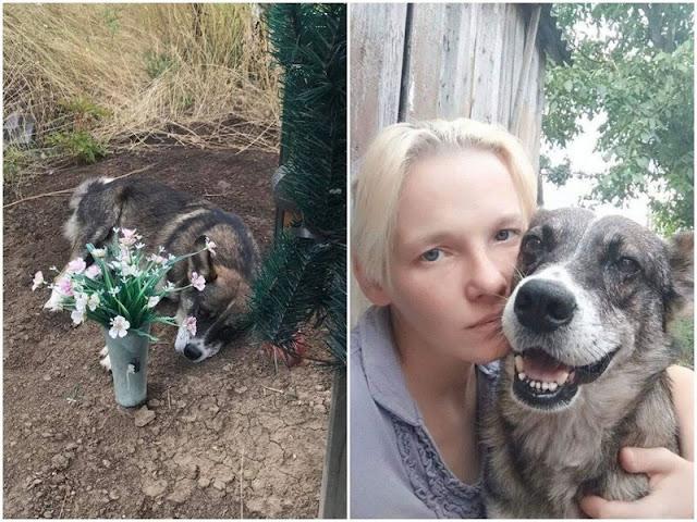 Пёс три года жил на могиле хозяина!!!