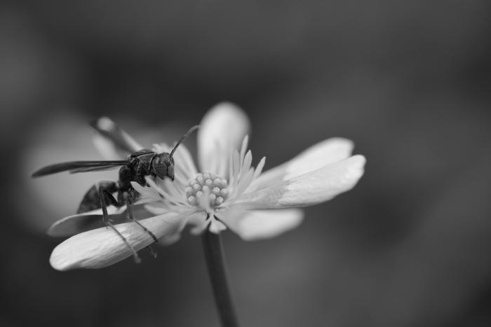 モノクロ写真 花