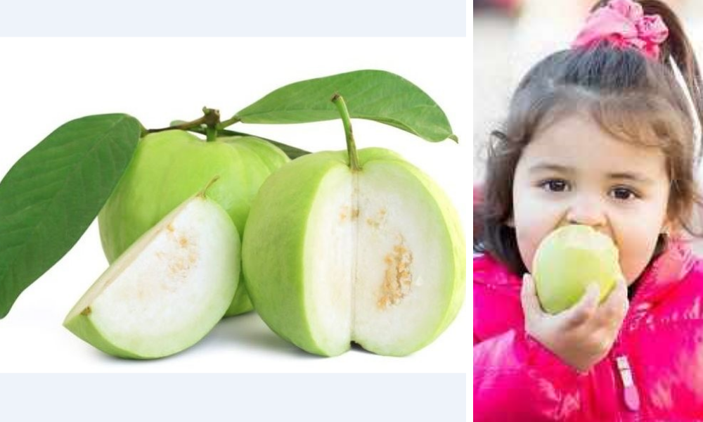 health benefits of guava,guava benefits,benefits of guava,guava fruit benefits,guava health benefits,benefits of guava leaves, guava juice benefits,