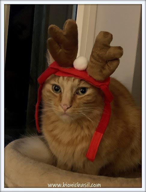 Fudge the Catdeer ©BionicBasil® The Pet Parade 383