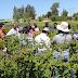 Masiva asistencia tuvo semana temática de berries dedicada a la sustentabilidad