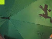 """seitlich: VON LILIENFELD grüner Regenschirm mit Tiermotiv """"Schattenfrosch"""""""