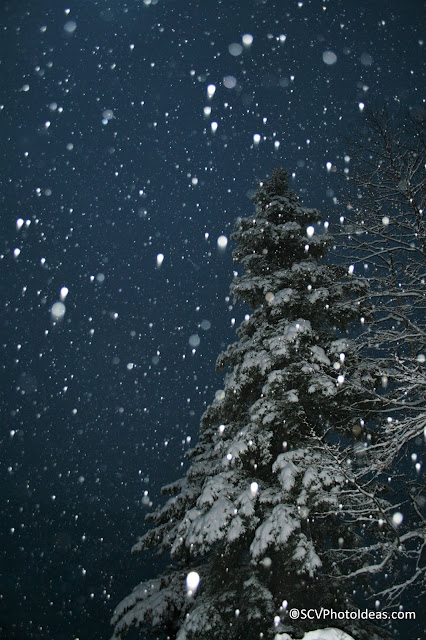 Winter snowed fir-tree night scene