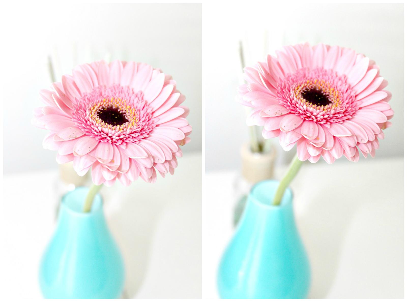 kwiaty w kolorze różu