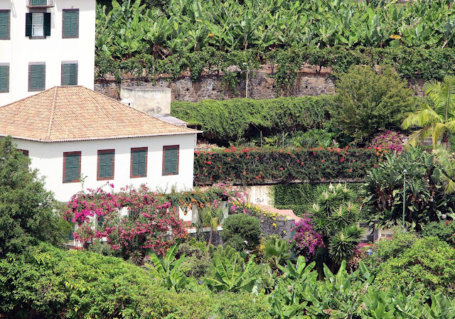 """flowers in a """"Quinta Madeirense"""""""