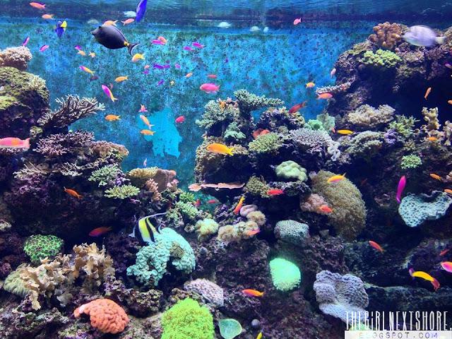 SEA Aquarium, Singapore