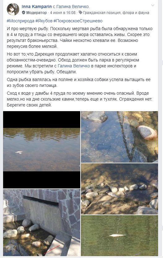 мертвая рыба в Покровском Стрешнево