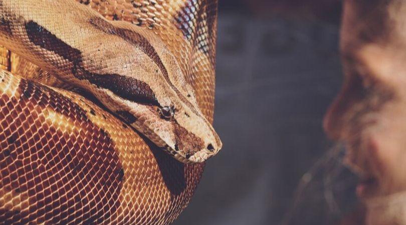 Tafsir mimpi digigit ular