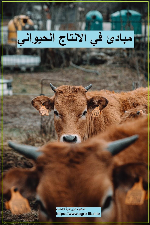 كتاب : مبادئ في الانتاج الحيواني