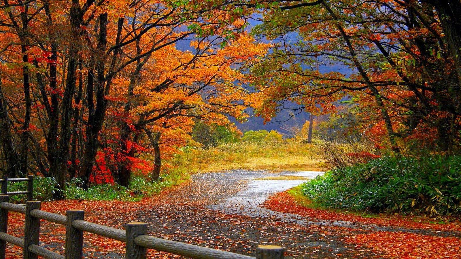 fun fall wallpaper - photo #19