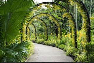 BotanicgardensSingapore