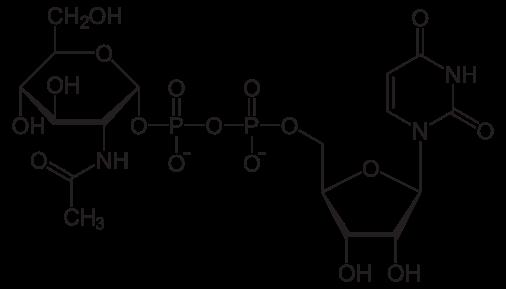 thanh phan japori serum