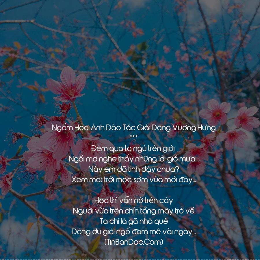 Thơ Hoa Anh Đào, 15+ Chùm Thơ Mùa Hoa Anh Đào Và Em Hay, Ý Nghĩa