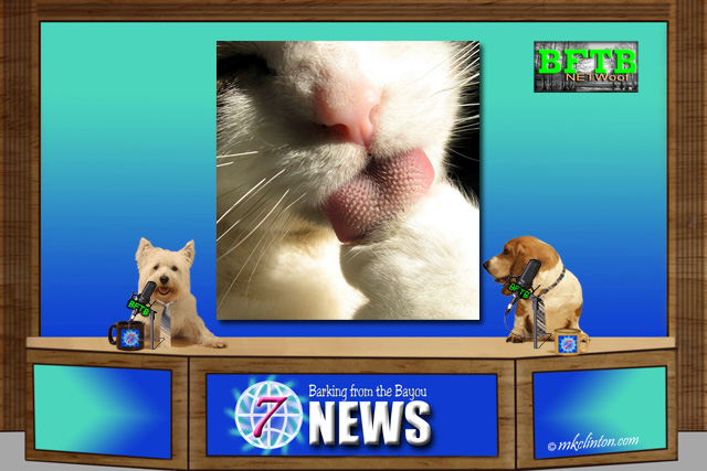 BFTB NETWoof News story on cat's tongue
