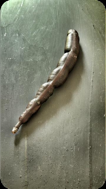 Tamarinden-Schote | Arthurs Tochter Kocht von Astrid Paul