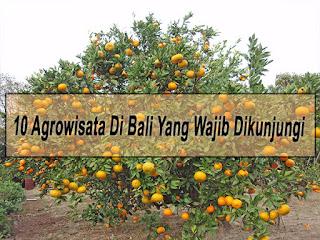 Inilah 10 Agrowisata Di Bali Yang Wajib Dikunjungi