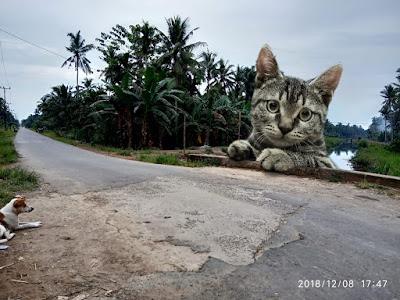 Gambar: Hasil Edit (Anjing menatap Kucing raksasa)