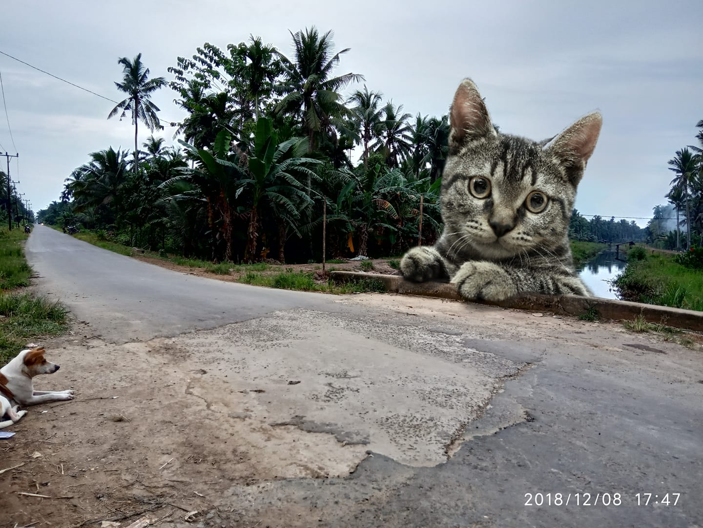 Gambar: Kucing Raksasa Edited By: Iwan RJ Lokasi: Desa Singkep parit 6, Tanjung Jabung Timur - Jambi
