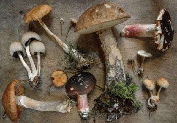 types of mushrooms health benefits