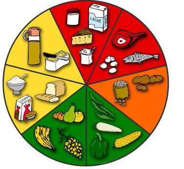 ruleta de la cadena alimenticia