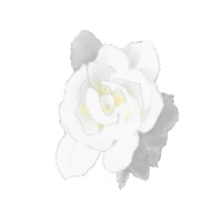 Digitially altered white gardenia photo