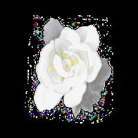 Digitially altered white gardenia photo