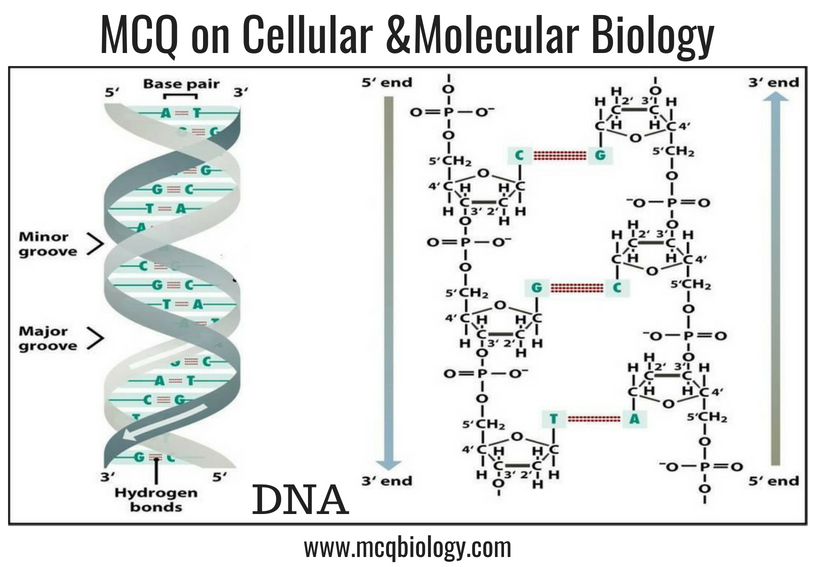 Multiple Choice Questions on Cellular and Molecular Biology