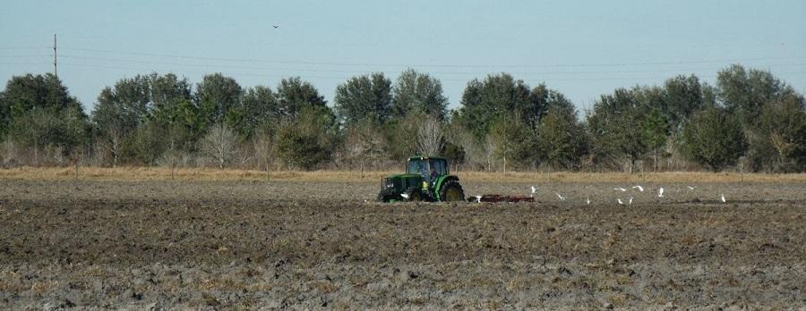 Arando los campos