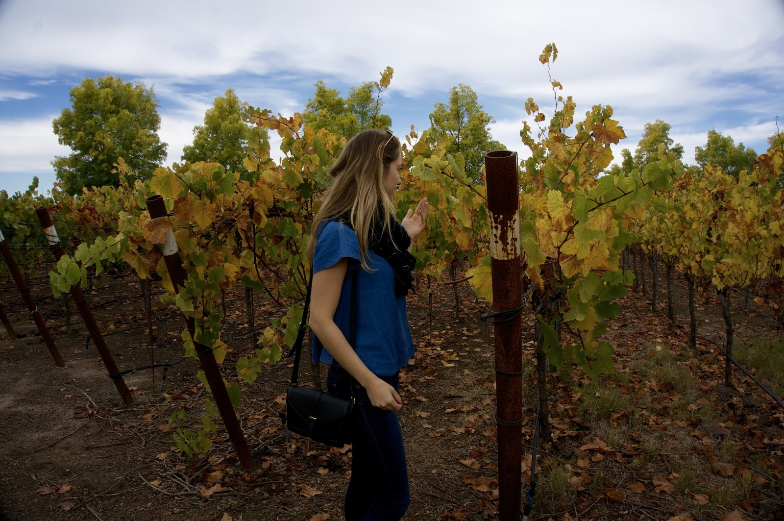 Sonoma in the Fall - www,greysuede.com