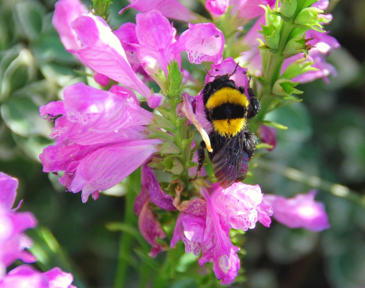 Immagini dei fiori pi belli for I telefoni piu belli