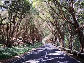 PORTUGAL / Serreta, Ilha Terceira, Açores, Portugal